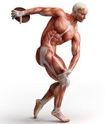 Core strength discus